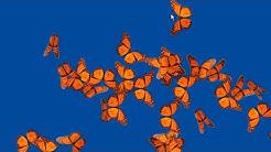 Butterfly on Desktop (Virus)
