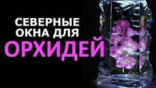 Северные окна для ОРХИДЕЙ, плюс БОМБИЧЕСКОЕ удобрение за 32 рубля