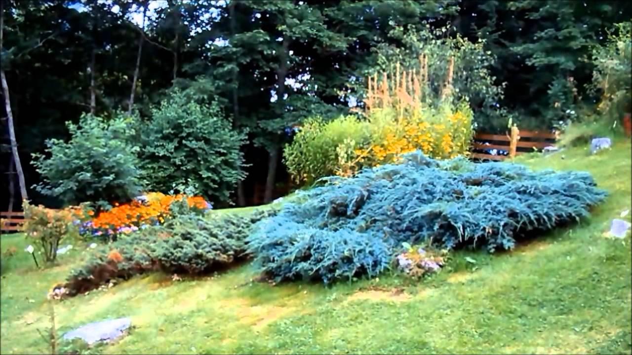 Fiori Da Giardino In Montagna garfagnana - giardini di montagna.wmv - youtube