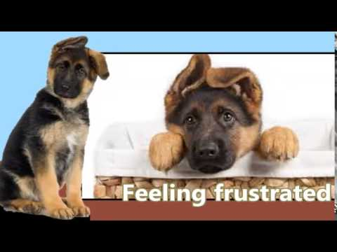 How to Train a Dog Not to Bark Handy Tips