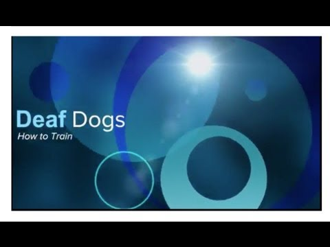 Dog Training Training A Deaf Dog Thriving Canine Youtube