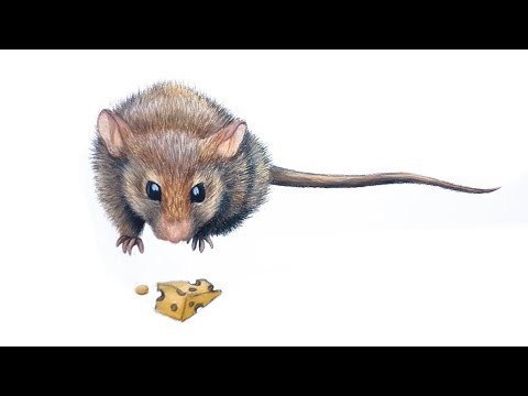 CUTE MOUSE DRAWING VIDEO TUTORIAL • Artist Isabella 11-Year-Old thumbnail
