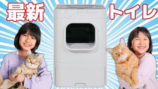 最新!!全自動猫トイレ購入!我が家の愛猫ルイとモカは新しいトイレを気に入ってくれるのか!?himawari-CH