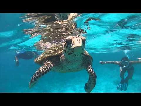 Snorkeling coco felicite