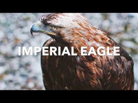 El Águila Imperial | Kazakhstan-Travel |