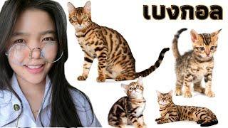 ประกวดสุดยอดแมวเบงกอล ครั้งแรกในประเทศไทย 1st Thailand Bengal Cat Show 2018   น้ำส้ม Vlog 4K thumbnail