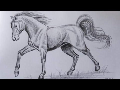 How to draw a Horse step by step | Pencil Shading Drawing