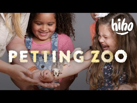 Kids Meet Sugar Gliders, Chickens, and Guinea Pigs! | HiHo Petting Zoo | HiHo Kids