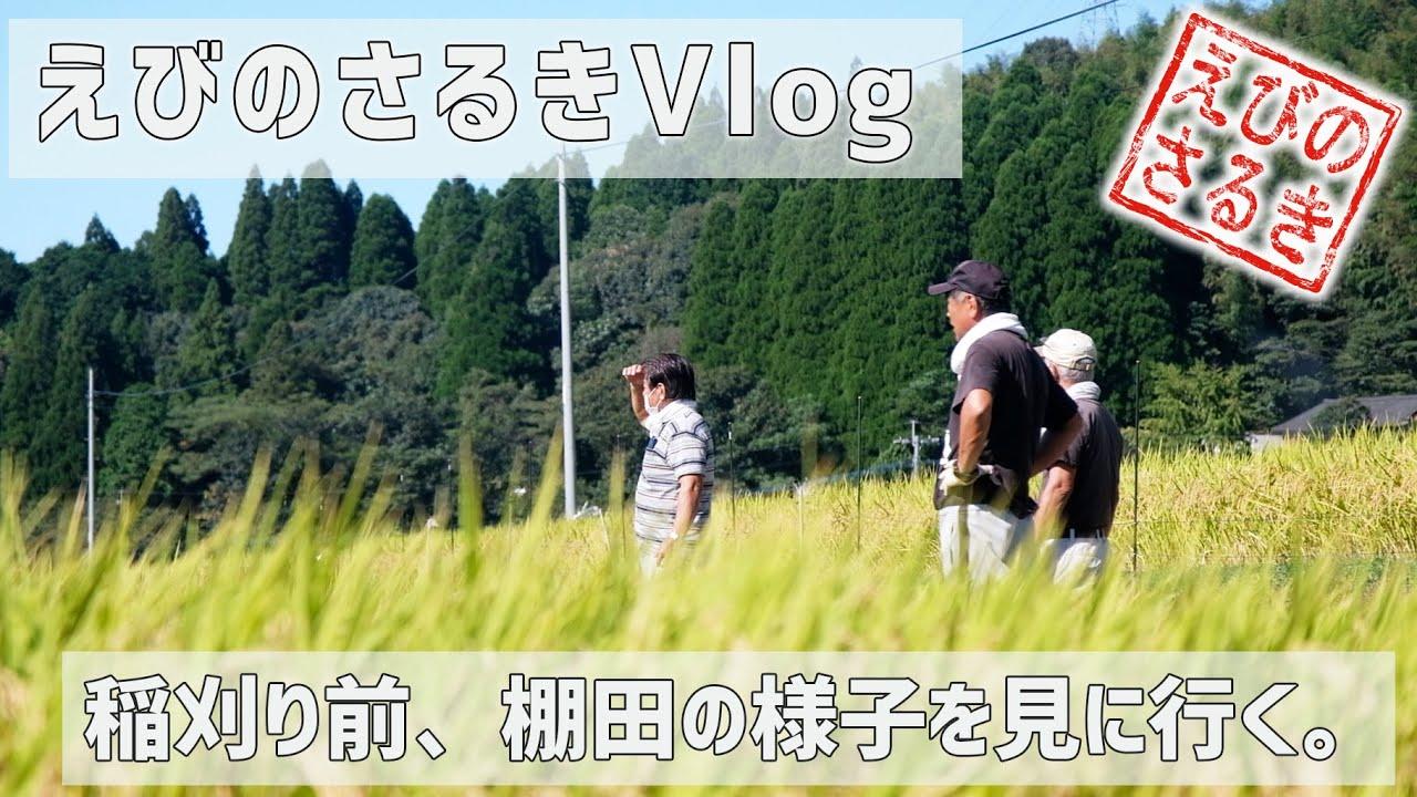 【えびのさるきVlog】稲刈り前、棚田の様子を見に行く。| 田植え | 棚田 | 田園風景 | 矢岳高原 | ヒノヒカリ | 田舎暮らし | 田舎移住生活 | 宮崎 | えびの