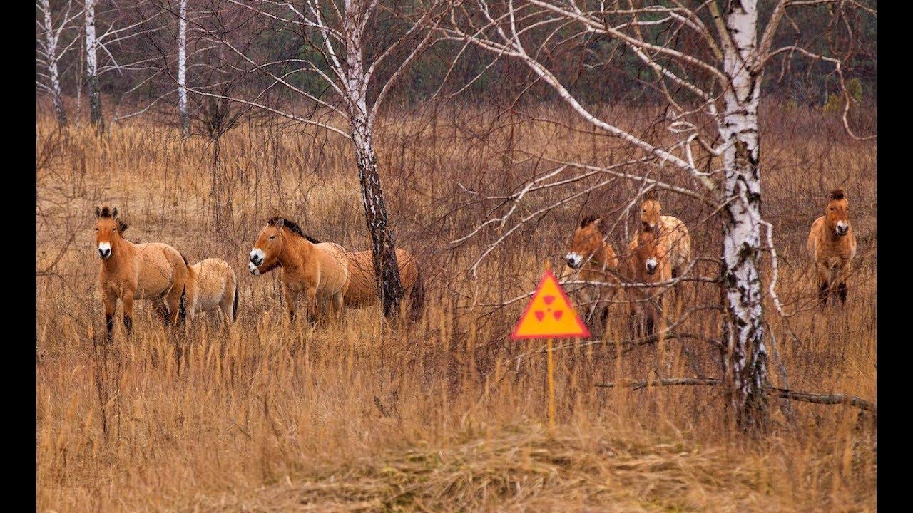Resultado de imagen para animals in Chernobyl