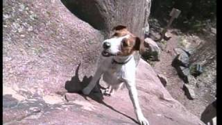 Biscuit the Climbing Dog from FRONT RANGE FREAKS by Sender Films