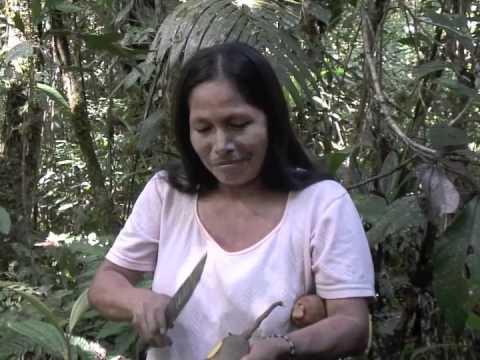 Download Amazonian Ethnobotany: Harvesting & eating Grias Neuberthii