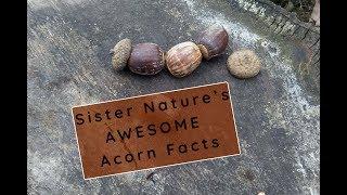 Sister Nature Season 1 | Acorns
