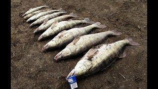 видео Ловля апрельского судака на реке