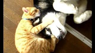 Dogs and cats play with http://happy.husky.tv/ 四国のハッピーカレン...