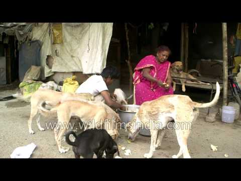 Delhi's ragpicker feeds multiple stray dogs