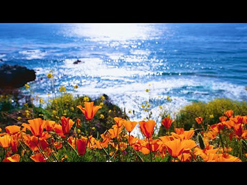 Beautiful Relaxing Hymns, Peaceful Instrumental Music, 'Big Sur Morning Sunrise' by Tim Janis