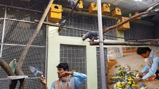 Exotic Birds Parrots Aviary / Calcium & Vitamin For Birds / Heart Touch with Birds.