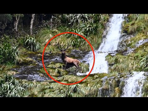 Elk Goes Tumbling Down Waterfall, Lands Right At Hunter's Feet In Wild Video