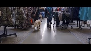 Best Dog Training in Columbus, Ohio! 7 Year Old Border Collie/Lab Mix, Ellie!