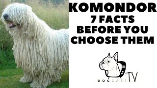 Before you buy a dog  KOMONDOR   7 facts to consider! DogCastTv!