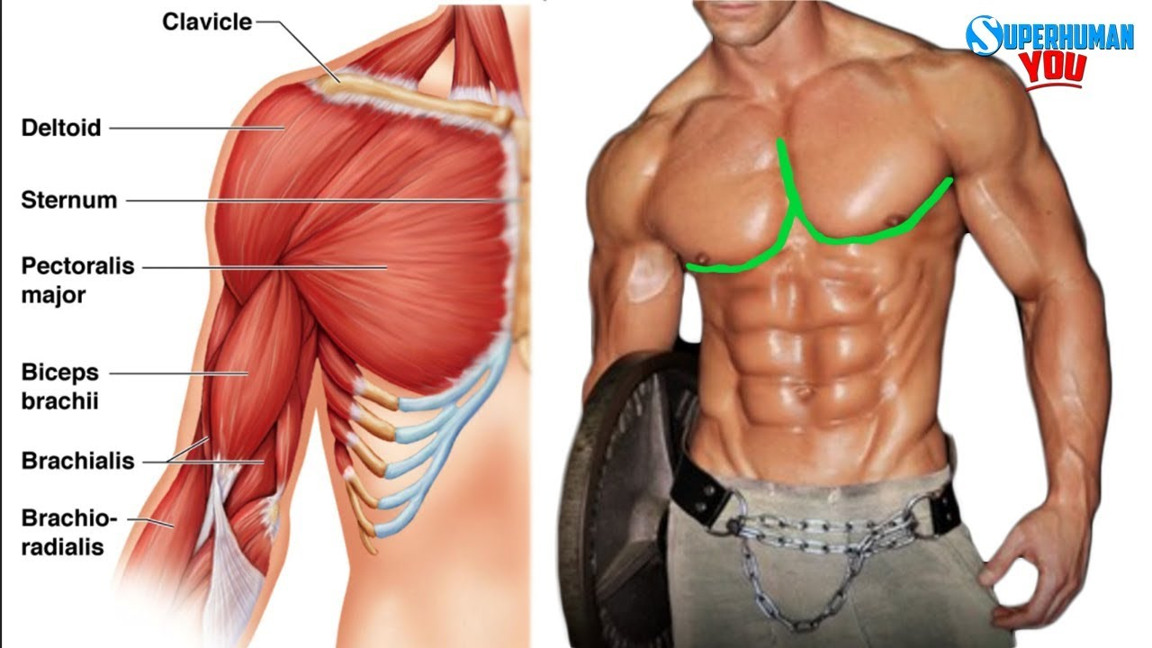 how to get the outer chest line youtube