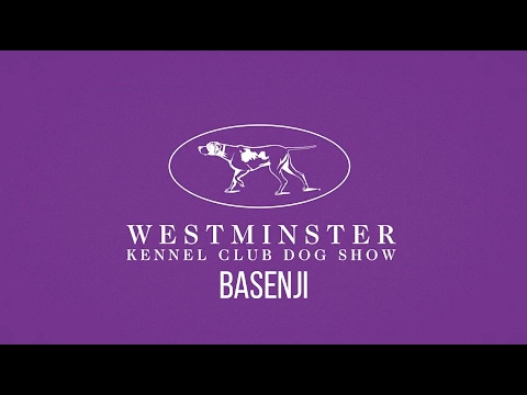 Westminster Kennel Club - Basenjis