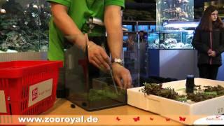 Einrichten Eines Dennerle Nano Cube 30 Liter Aquarium
