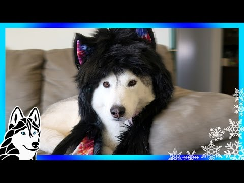 HOWLING HUSKIES | Celebrating 400k with a Spirithoods Giveaway