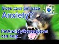 New Pet Anxiety Relief Products & Natural Pet Products, Stress-Reducing Dog Pools & Dog Toys...