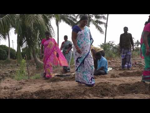 36 x 36 model Land Preparation_ Natural Farming method _ Nellore