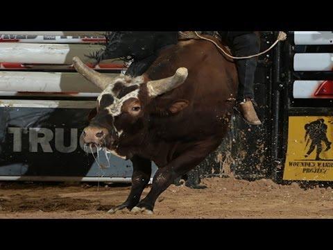Gt Champion Bull Bushwacker To Retire At Season S End