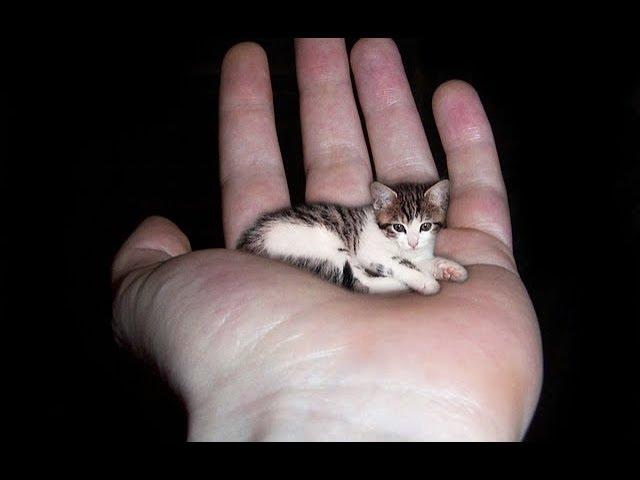 Удивительная кошка!