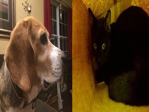 Dogs Vs Cats Trailer