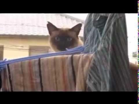 Cat Sail Jump Gif
