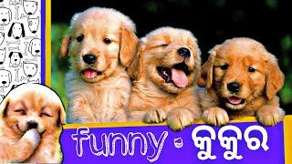 Funny କୁକୁର ଭିଡିଓ ll  funny dogs craze videos ll  funky Odia