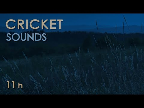 Cricket Sounds - Crickets Chirping at Night - Nature Sounds for Sleep & Relaxation - 11 Hours
