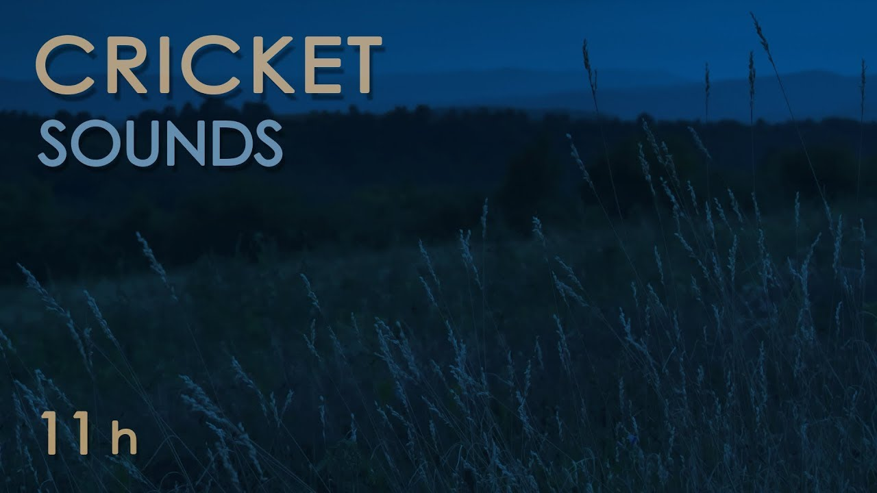 Cricket Sounds - Crickets Chirping at Night - Nature Sounds for Sleep &  Relxation - 11 Hours