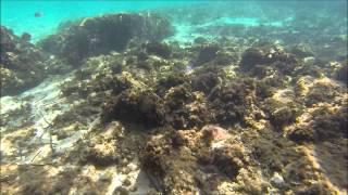 Gopro Hero 3 Black Edition Diving Snorkeling In Spain Majorca Part 1