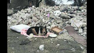 Брошенные во время войны в Донецке элитные кошки и собаки весили по 300 грамм...
