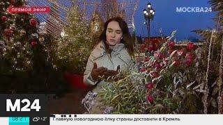 """""""Утро"""": на погоду в столице повлияет холодная часть южного циклона - Москва 24"""