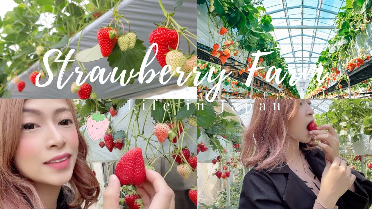 A Day On a Japanese Strawberry Farm | いちご狩り|フィリピン人家族| Life in Japan