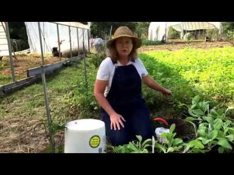 Companion planting & beneficial cover crops – Deep South organic gardening