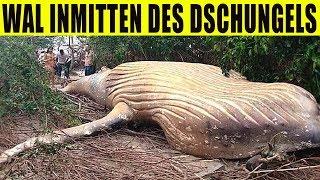 9 seltsamste Funde im Dschungel!