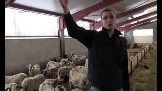 En production ovine, Gagner le pari de l'avenir