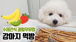 강아지 수제간식 과일우유껌 먹방 (mukbang Bic…