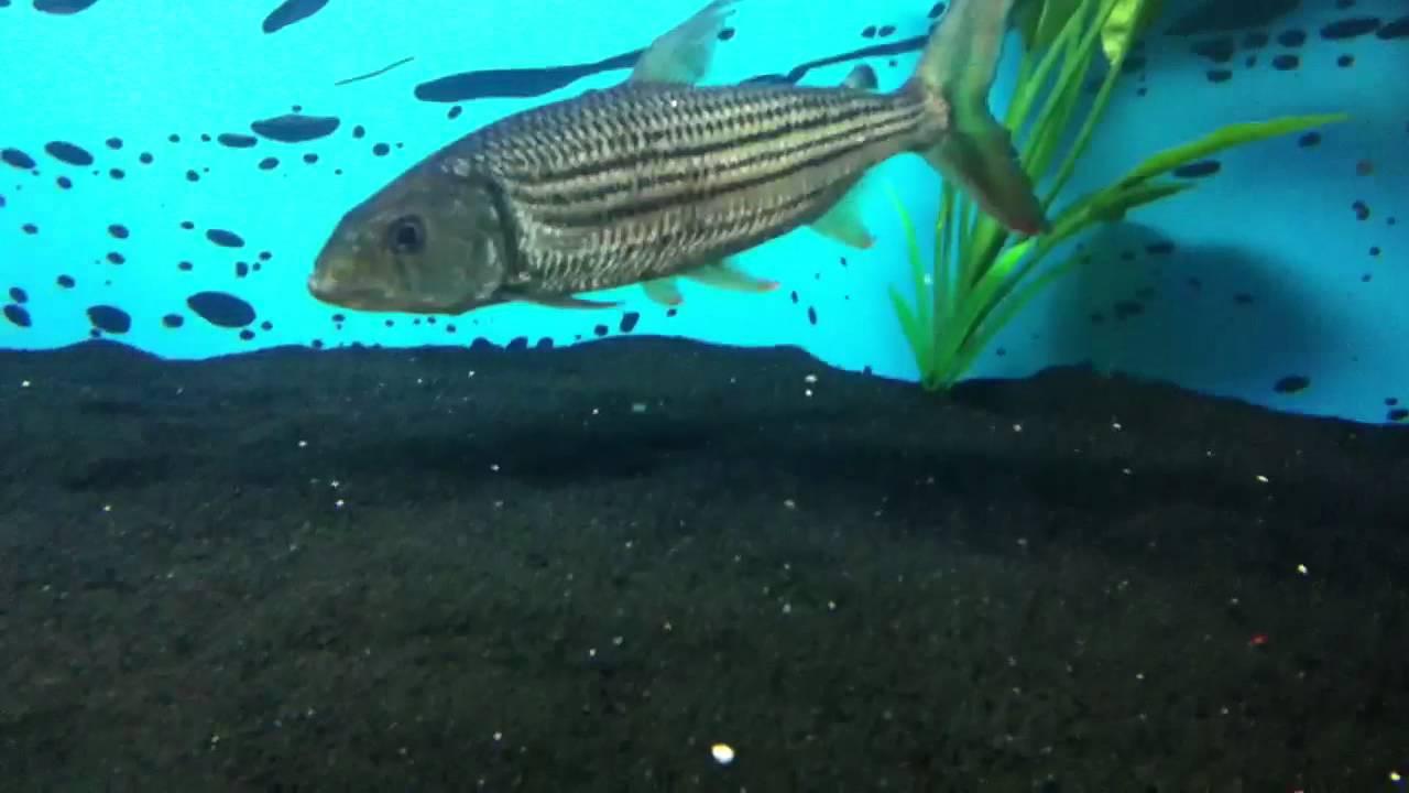 Fish aquarium on youtube - Fish Aquarium On Youtube