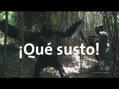 Los gorilas nos sacaron un susto! | Uganda y Ruanda #7