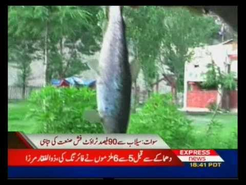 Trout Fish farm Swat Valley Pakistan Sherin Zada Express news Swat.flv