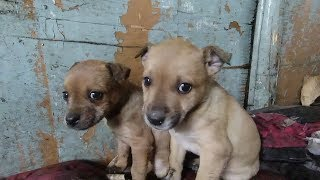 Puppies still drink mother's milk